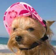 Myrtle Beach pet friendly winter rentals