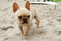 North Myrtle Beach pet friendly vacation rentals