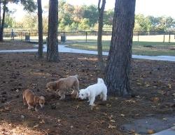 Pet Friendly Activities in North Myrtle Beach