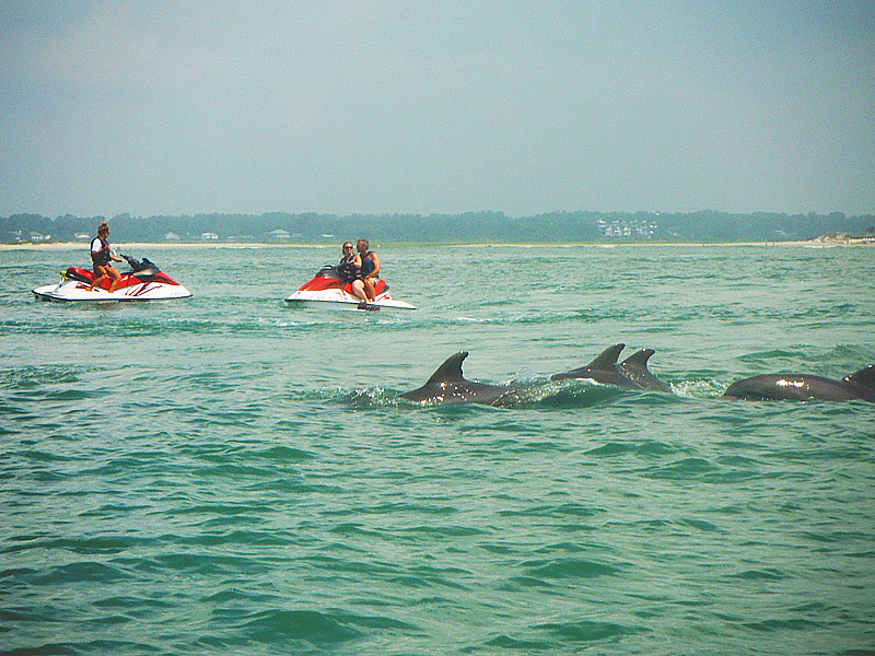 Dolphin Tours Near North Myrtle Beach