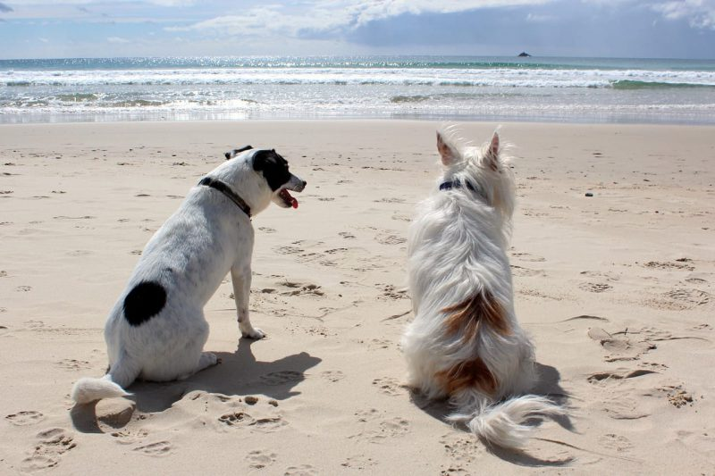 Pet Friendly Things To Do North Myrtle Beach Grand Strand Resorts