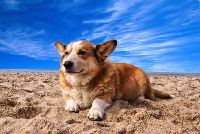 North Myrtle Beach Dog Rules & Vacation Tips